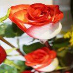 Contrariedades en Puebla, Arreglo con rosas, Florerías en Puebla, Flores a domicilio Puebla