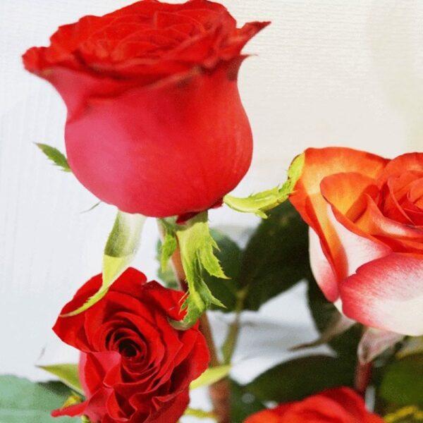 Contrariedades en Puebla, Arreglo con rosas Florerías en Puebla, Flores a domicilio Puebla