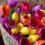 Tulipø