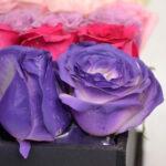 Colores de amor, Caja de rosas Querétaro, Florerías en Querétaro, Flores a domicilio Querétaro