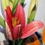 Contrariedades, Arreglo con rosas en Querétaro, Florerías en Querétaro, Flores a domicilio Querétaro