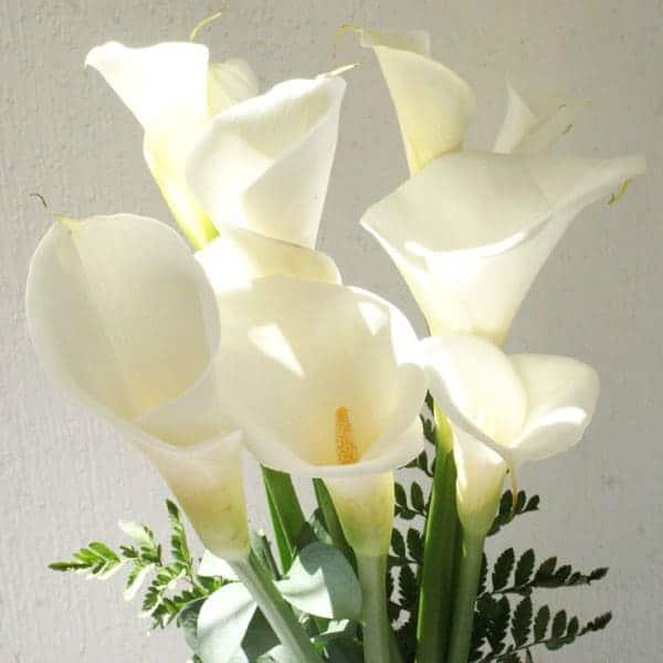 Alcatraces Arreglos Florales Envía Flores A Domicilio Pachuca