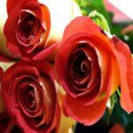 Doce poemas de amor