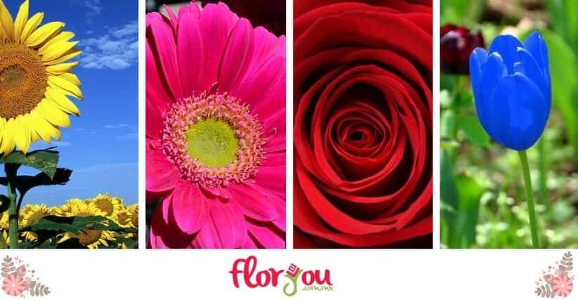 Flores usuales para arreglos florales