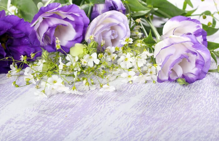 Las Flores Más Costosas Del Mundo