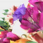 Virginia - Especial La Casa de las Flores