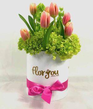 Tulipanes, Florerías en Pachuca, Envío de flores a domicilio Pachuca