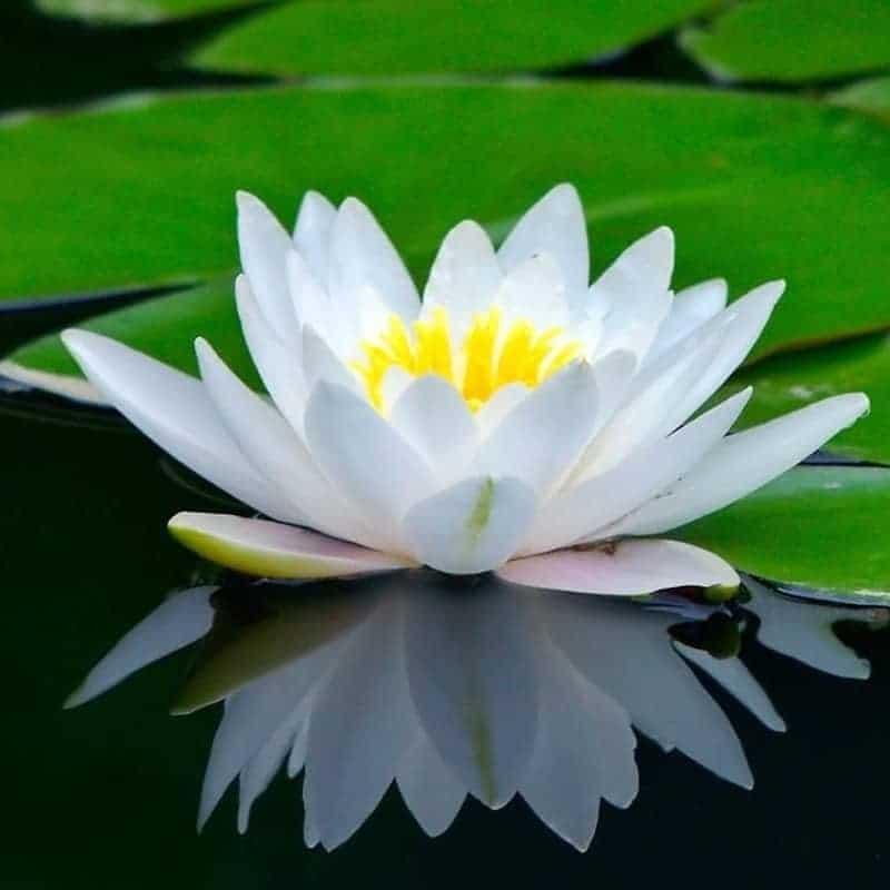 Historias asombrosas sobre flores