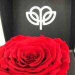 Onix roja - Rosa Eterna