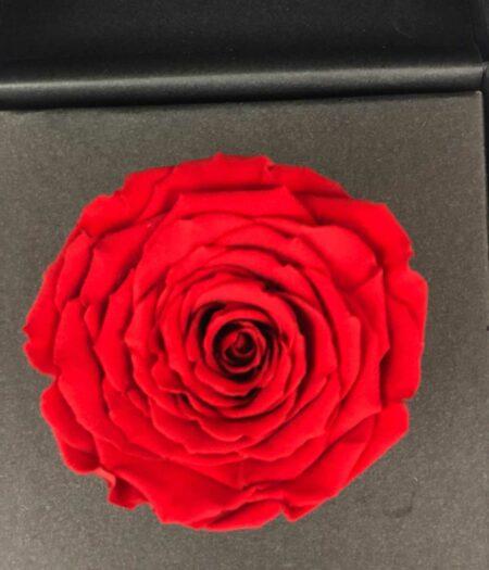 abrázame roja, florerias en pachuca