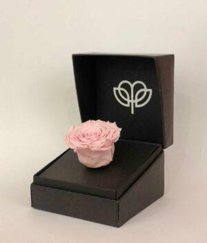 Abrázame rosa, floreria en Pachuca