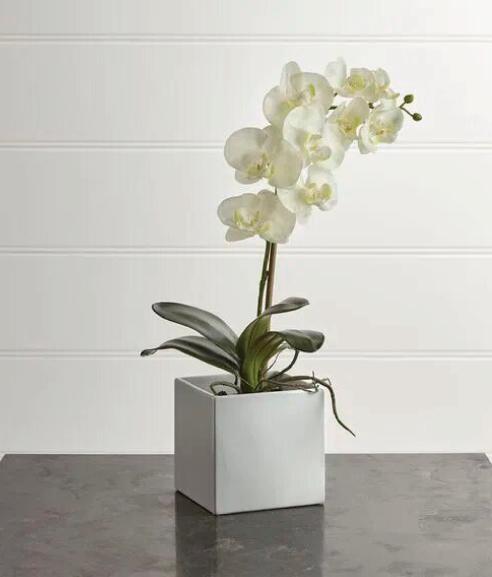 Orquídea Leya
